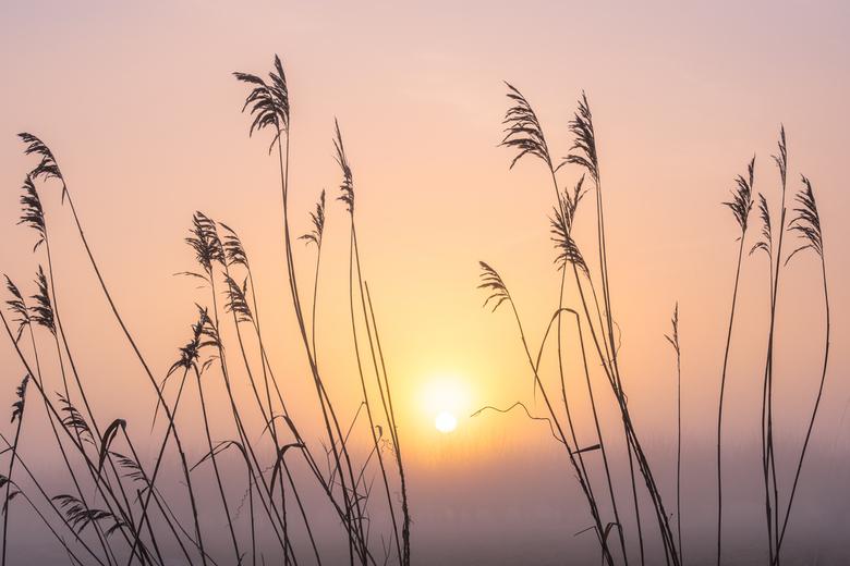 Mistige zonsopkomst - Sommige mistige ochtenden leveren een magisch plaatje. Door de mist is de zon waterig en de kleuren zijn dromerig.
