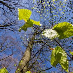 Spring leaves not yet....