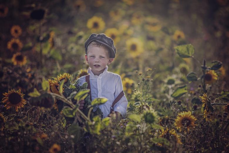 Sunflowers - Zo'n mooi, lief klein jongetje midden in het grote veld zonnebloemen. Genieten!