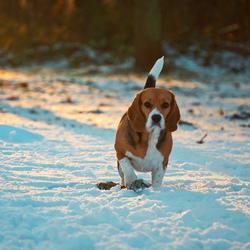 Warm zonlicht in de ijzige sneeuw