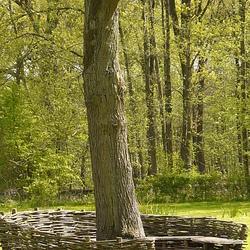 een bankje rond de boom