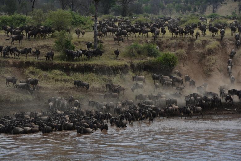 De oversteek van de Mara rivier - Hoe gezegend kan je zijn als bij aankomst bij de Mara rivier, uren van dit prachtige tafereel kan genieten. De jaarl