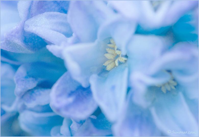 Icy blue - Wat gespeeld met scherptedieptes.