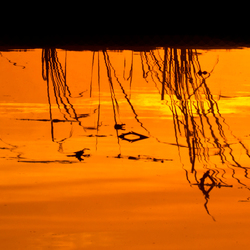 Sunrise at the Polder