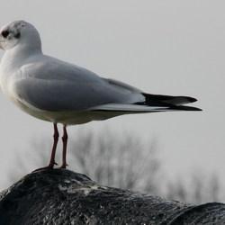 Vogel serie 28.