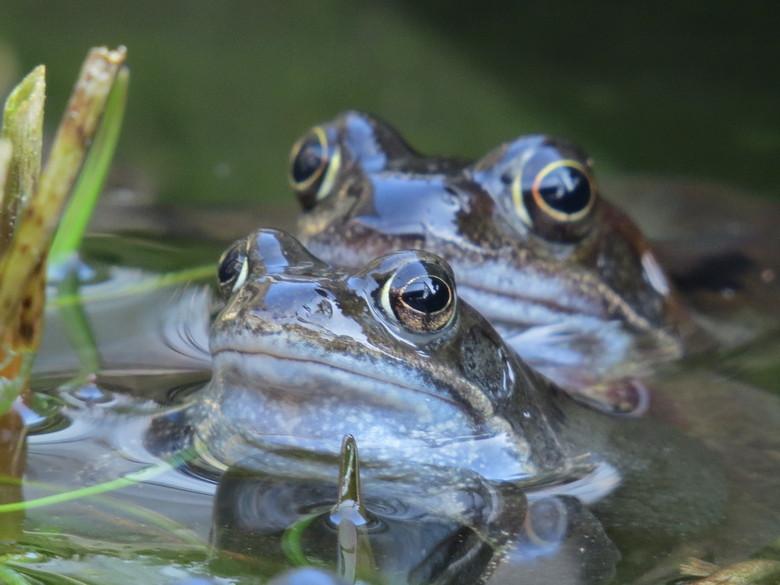 vijver der liefde - Het eerste teken van leven (buiten de vissen) is weer volop aanwezig in onze lege vijver. De plantjes van vorig jaar zijn eruit, z