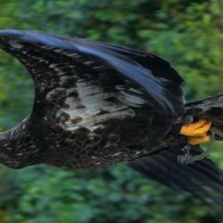 Nog een roofvogel in GaiaZoo