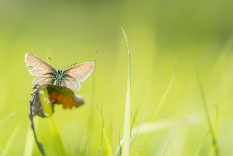 Spreid je vleugels