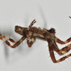 Zwevende spin