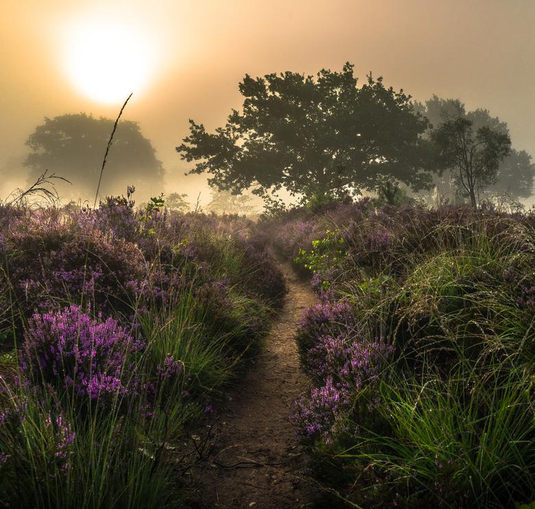 mist sallandse heuvelrug
