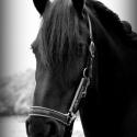 Paarden fotografie^^