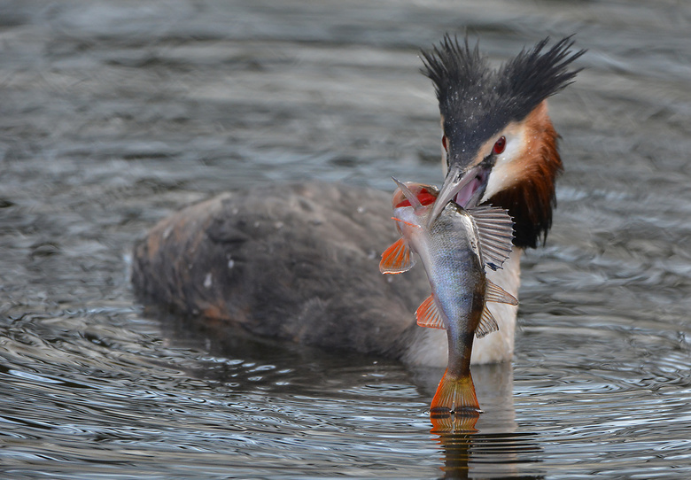 Zet vaker vis op het menu!