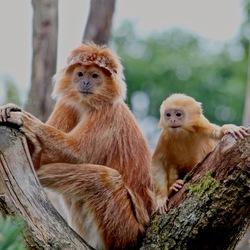 Nieuwsgierige aapjes