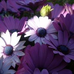 de bloemetjes buiten zetten