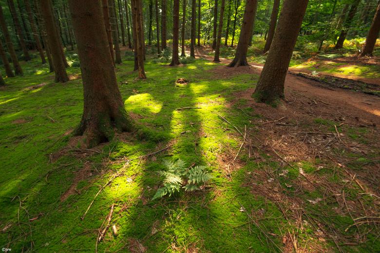 Zonnestralen ver het groene mos