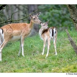 Mommy Deerest