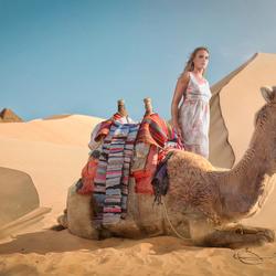 De kamelen kunnen weer op stal