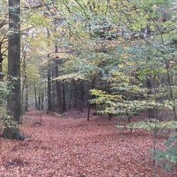 Herfst in Ommen
