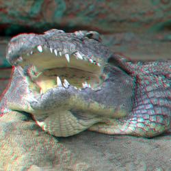 Croc Blijdorp 3D