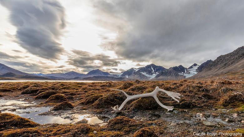 Recherchefjord - Het gewei van een rendier in landschap van Spitsbergen