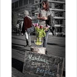 Rotterdam - Occupy