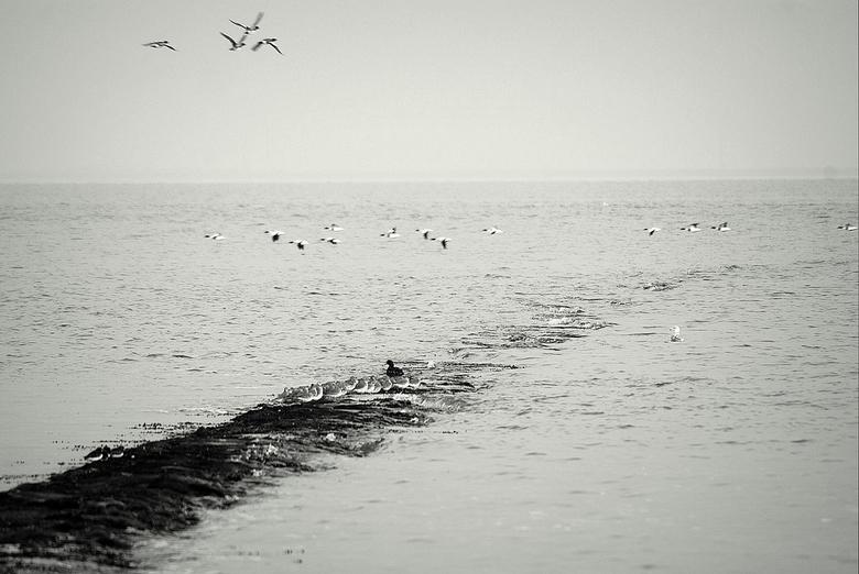 Zittenblijvers - Wat moeten we, vliegen of blijven zitten.