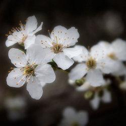 Onderweg naar lente