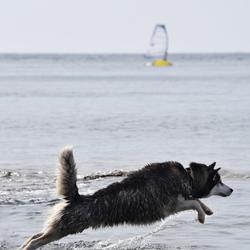 Go Fetch!!! 2
