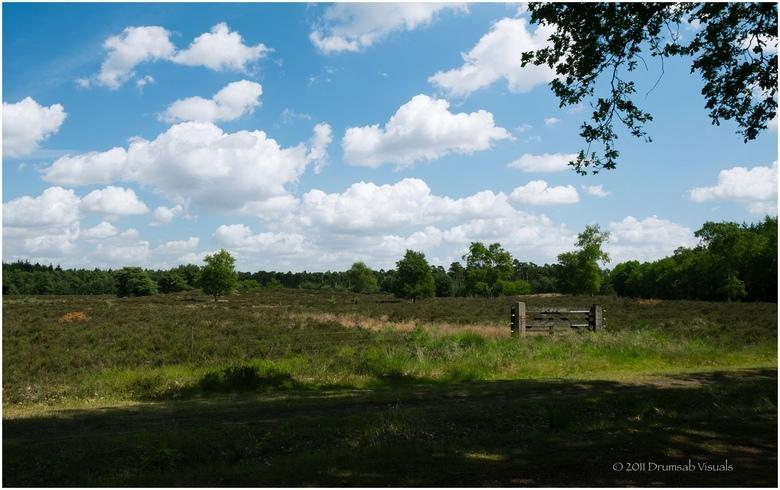 Leenderhei - Mooie dag vandaag, even het Leenderbos in.
