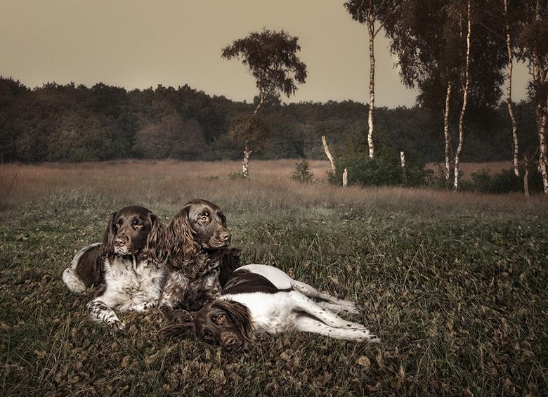 The Hunters - Een manipulatie van drie foto's.