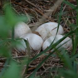Verlaten nest