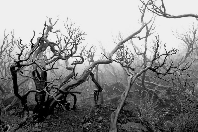 mist - Verbrand bos in de mist, Madeira