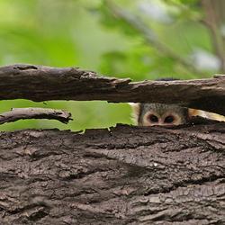 Hide-and-Seek....