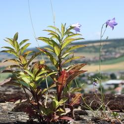bloem op een muur