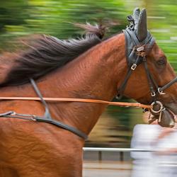 close up paard op snelheid