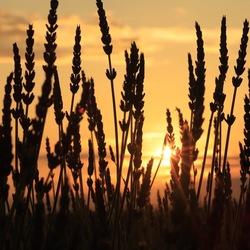 Zonsondergang in de Provence