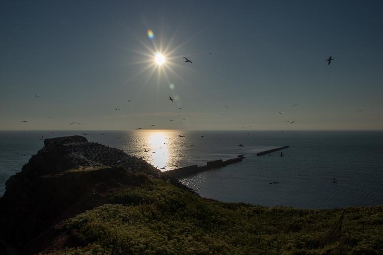 Helgoland - Prachtig schouwspel van het aan- en afvliegen van de Jan van Genten op het puntje van Helgoland. Een spectakel wat de hele dag door gaat.
