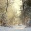 Zonnestralen in de sneeuw