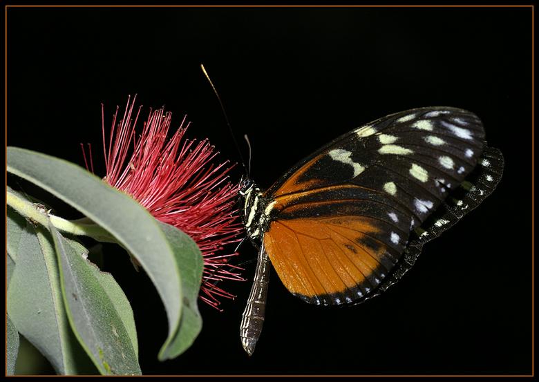 more colours to come! - Ze blijven toch 1 van mn favorieten, die prachtige vlinders zo teer en zo kleurrijk!<br /> <br /> Iedereen weer bedankt voor