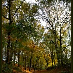 herfst in Limburg 2