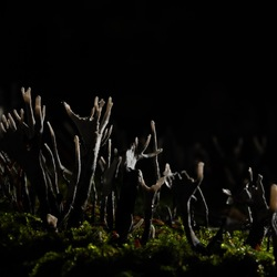 Geweizwammen in het duistere bos