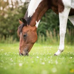 Gewoon even paard zijn