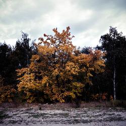 Een bos bomen