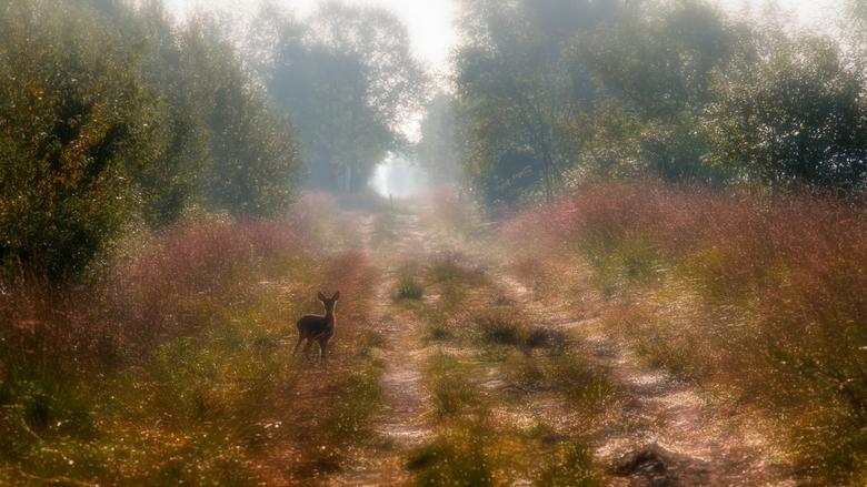 All alone??? - Op een heerlijke ochtend waar ik de moed kon vinden vroeg uit mijn bed te stappen... had ik een ontmoeting in het prachtige Bargerveen,