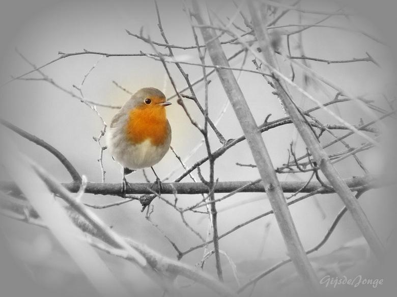 Robin - ...