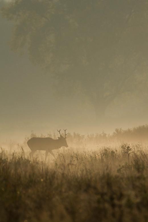 morning walk -