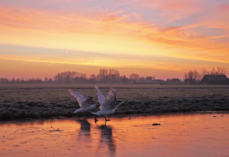 Vroege vogels - Vroege vogels op een bevroren poldersloot even voor zonsopkomst.