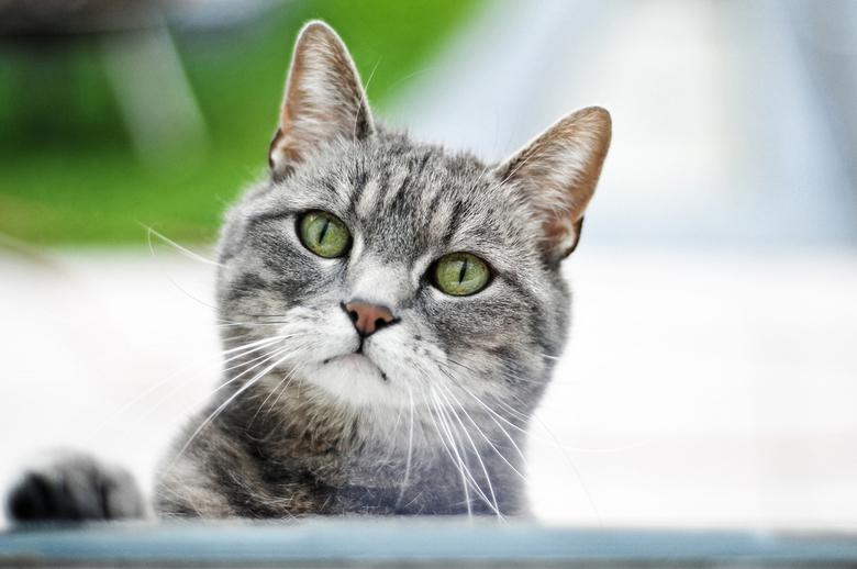 Waarom mag ik niet naar binnen... - Kat staat voor een raam omdat ze naar binnen wil.