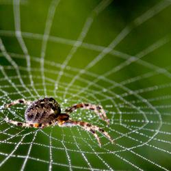 Er was eens een spinnetje
