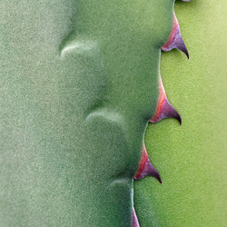 agave ritssluiting